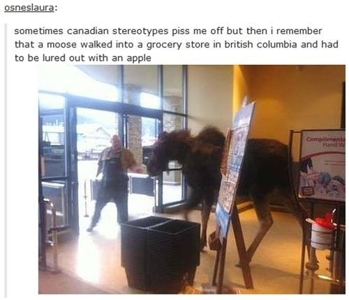 TOP 10 TRUE CANADIAN STEREOTYPES!