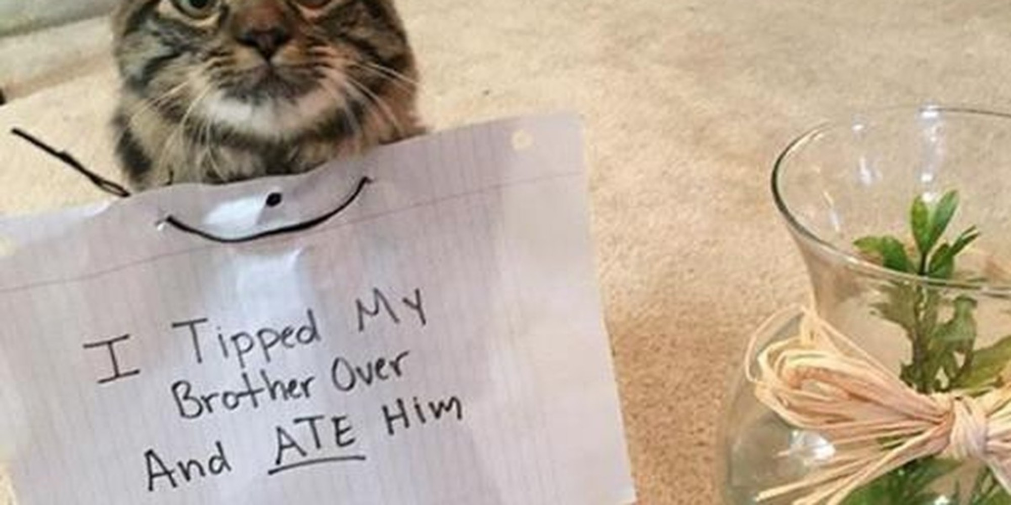 23 Cat Shaming Pictures All Cat Owners Will Understand