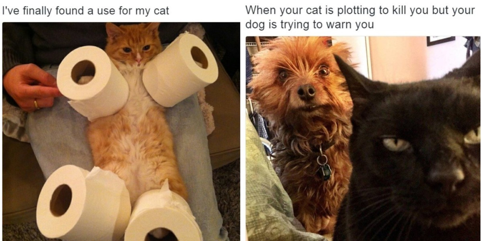 25 tweets about cats that will make you laugh out loud