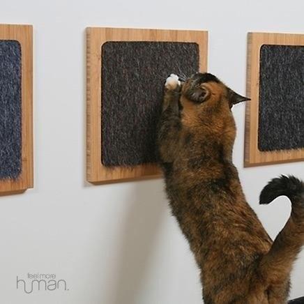 16 Cat Hacks That Actually Work