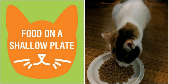 16 Hacks That Will Almost Make Your Cat Love You
