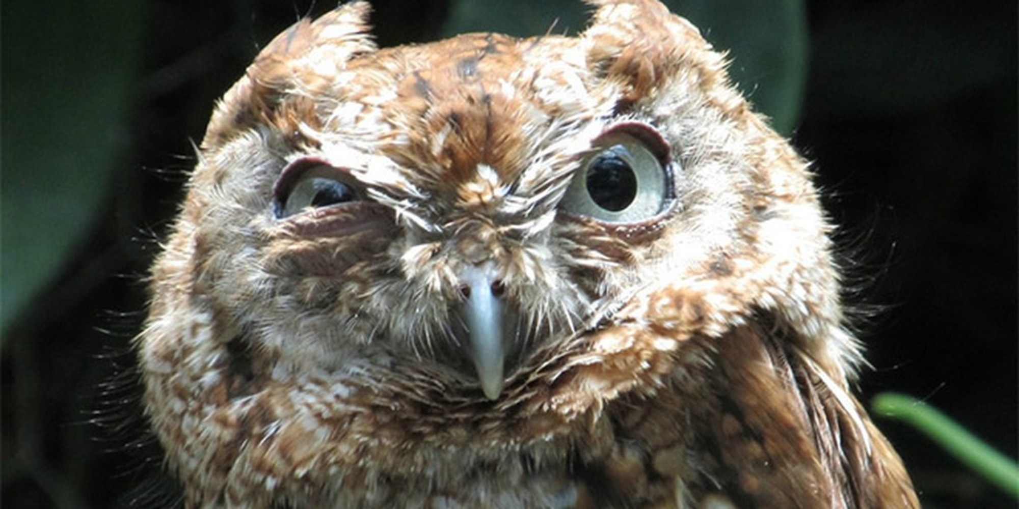 36 Grumpy Animals Who Have No Patience For You Today