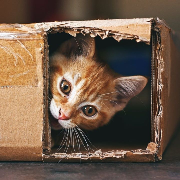 If I Fits I Sits Secret Of Cats 39 Love Of Boxes Finally Revealed