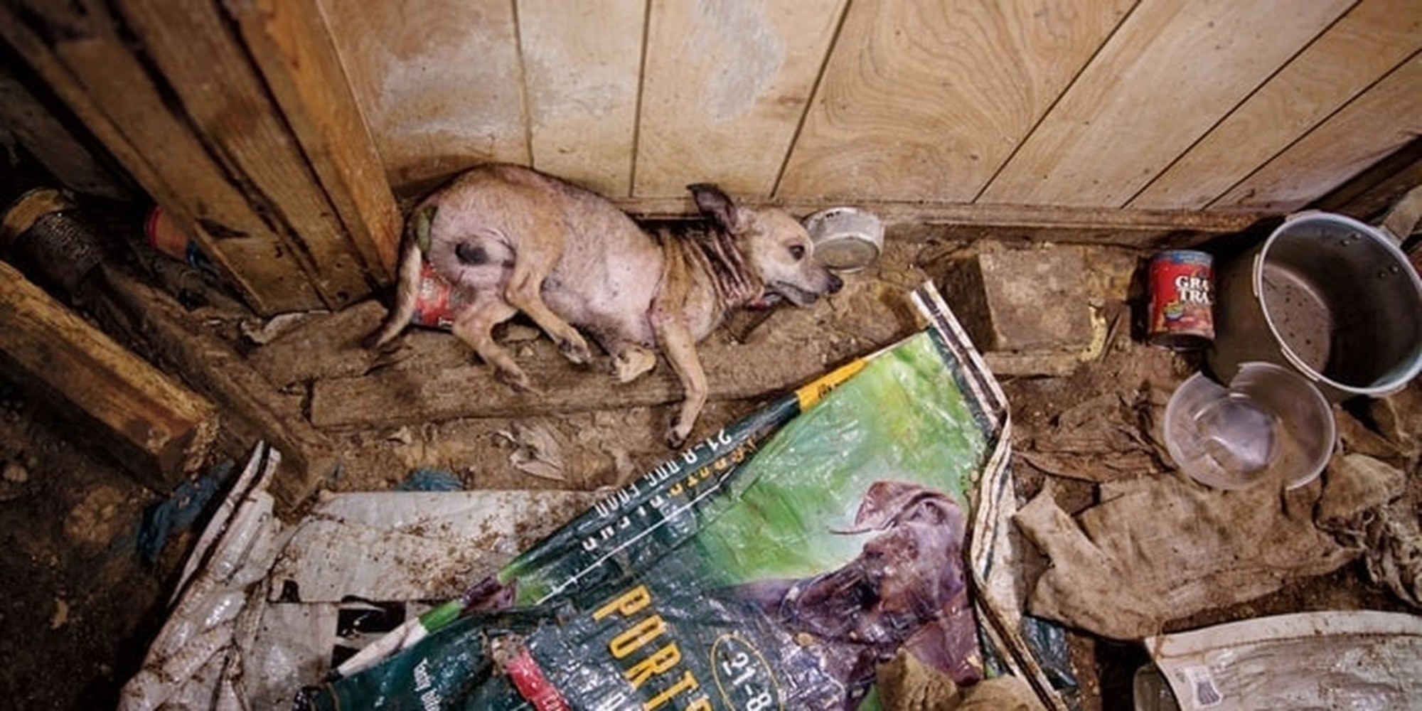 U S Government Is Helping Puppy Mills Hide Animal Cruelty