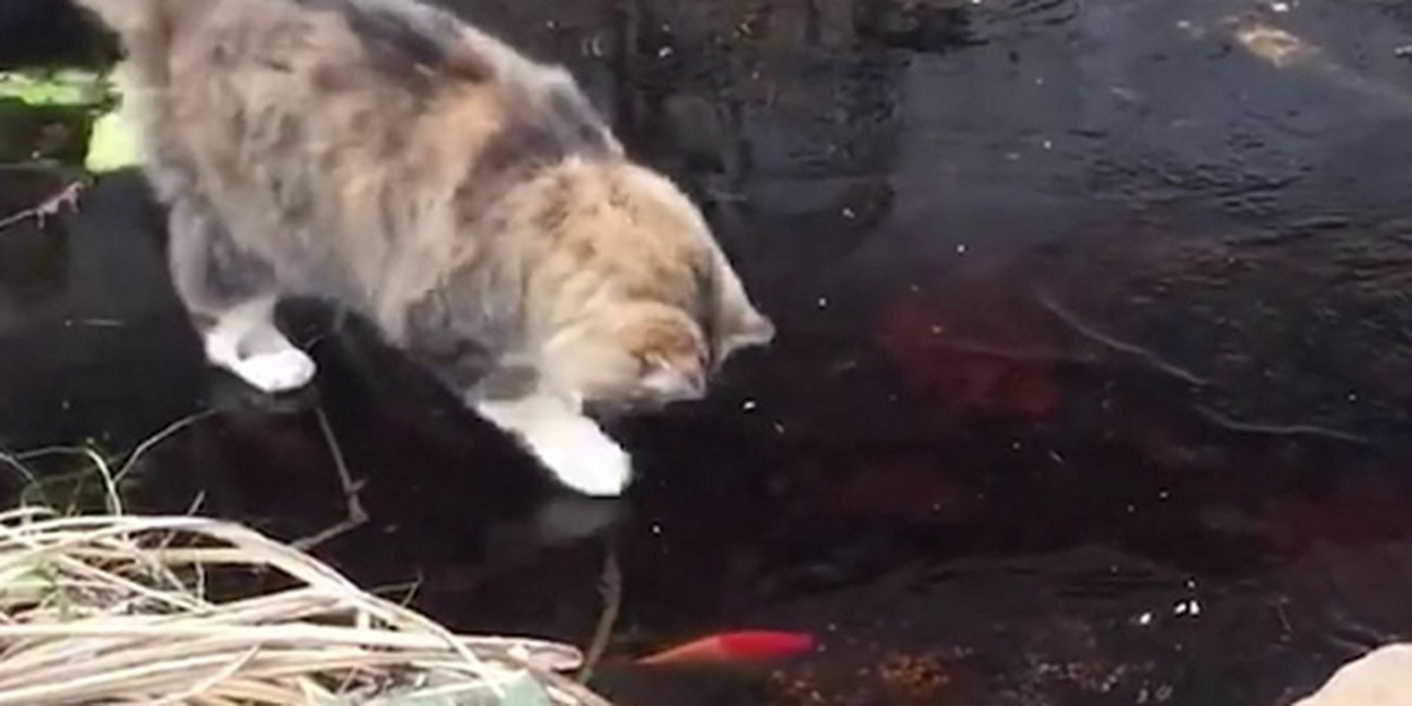 Cat tries to go fishing but runs into one problem for Cats go fishing