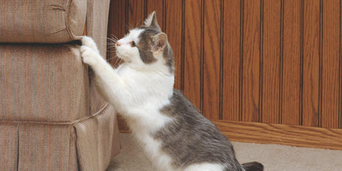How To Get Cat To Scratch Post