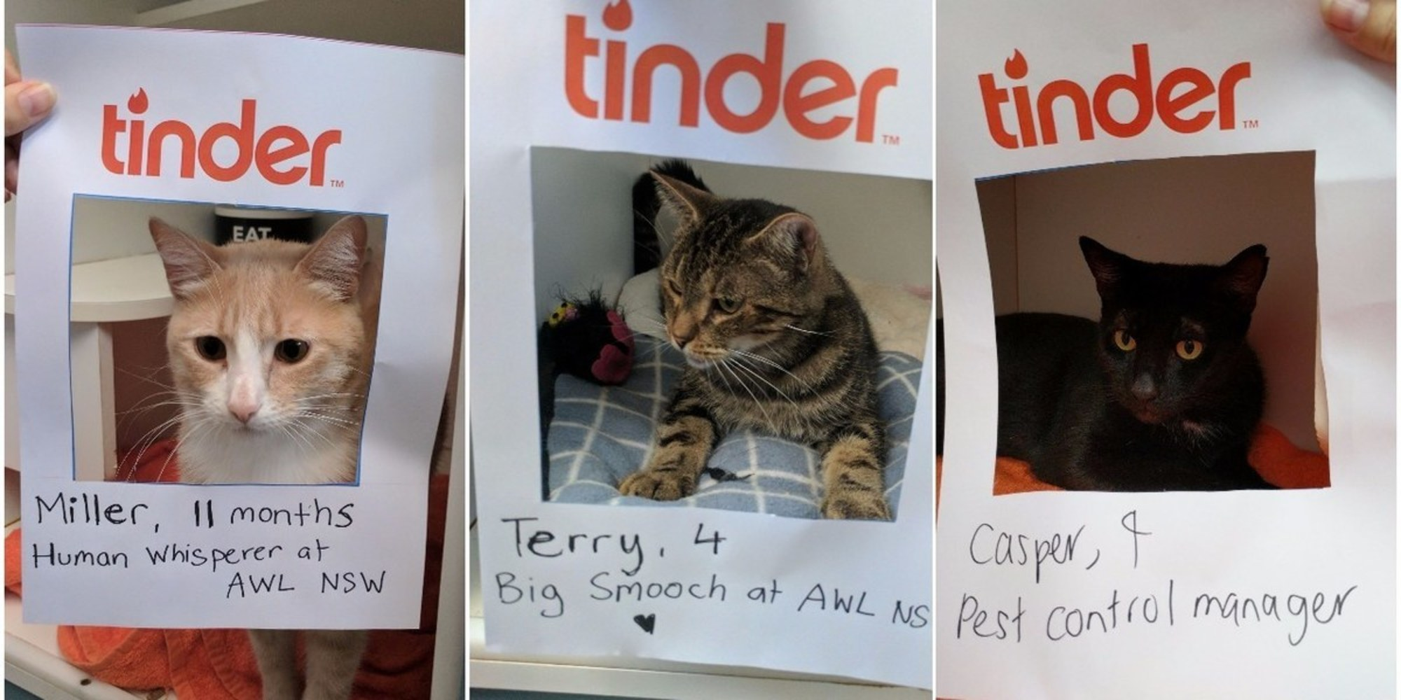 If cats had dating profiles