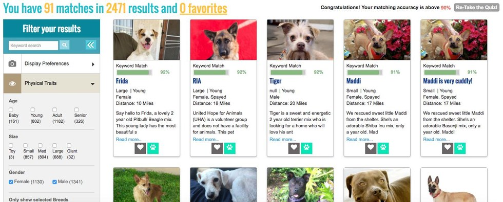 quiz what breed of dog matches your personality dog