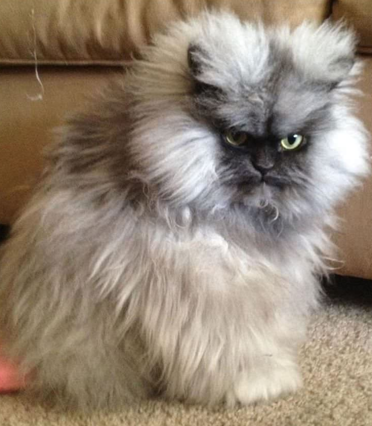 Hilarious Photos Of Cats That Are Absolutely Fed Up - 17 cats that are angry grumpy and fed up with everything