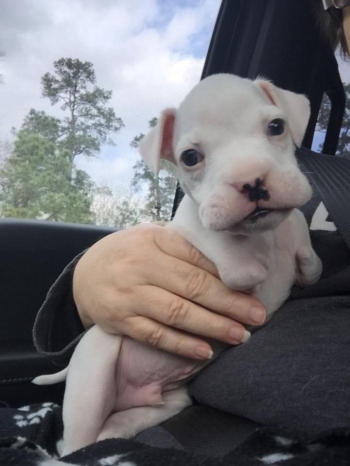 Nubby Bowlin puppy