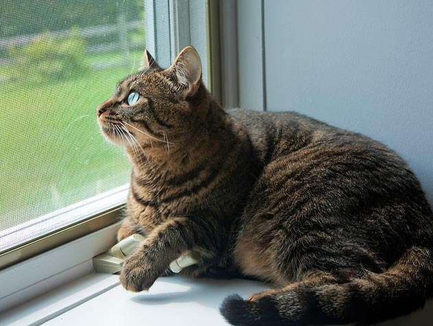 The Foolproof Guide To Turning Your Outdoor Cat Into An ...