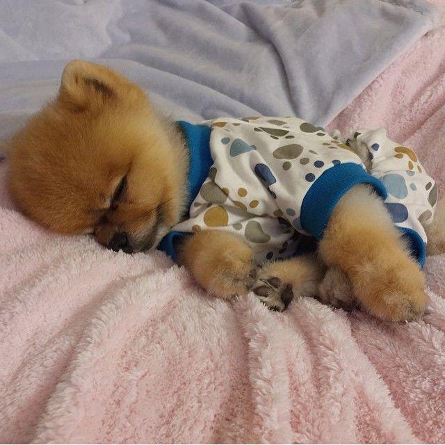 26 Puppies Wearing Pajamas Who Can Cheer Up Literally Anyone