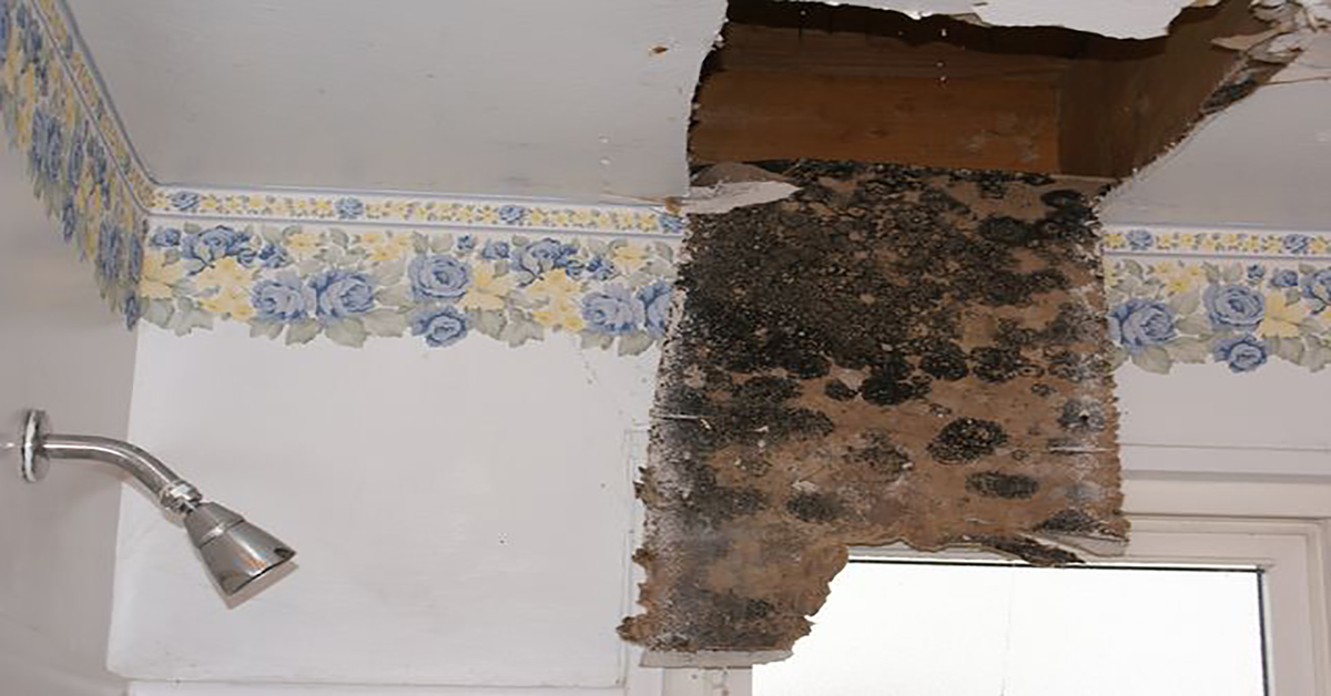 You Need To Know These Signs Of Mold Sickness