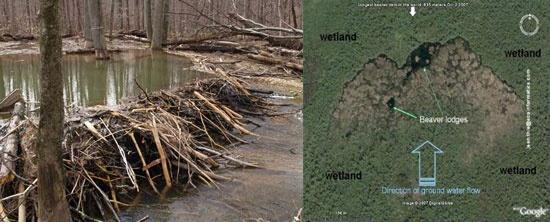 Wood Buffalo National Park >> Largest Beaver Dam In The World Can Be Seen From Space