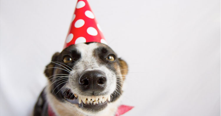 11 Dogs With Their Birthday Cakes Will Make You Happy Cry