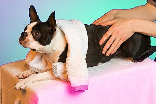 Щенок запор массаж