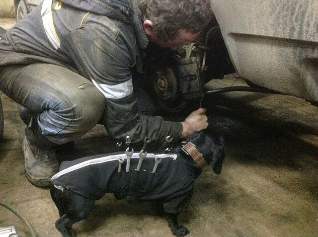 Mechanic and wiener dog