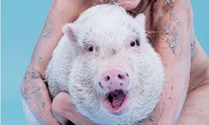Nora The Pig