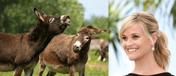 Reese Donkeys