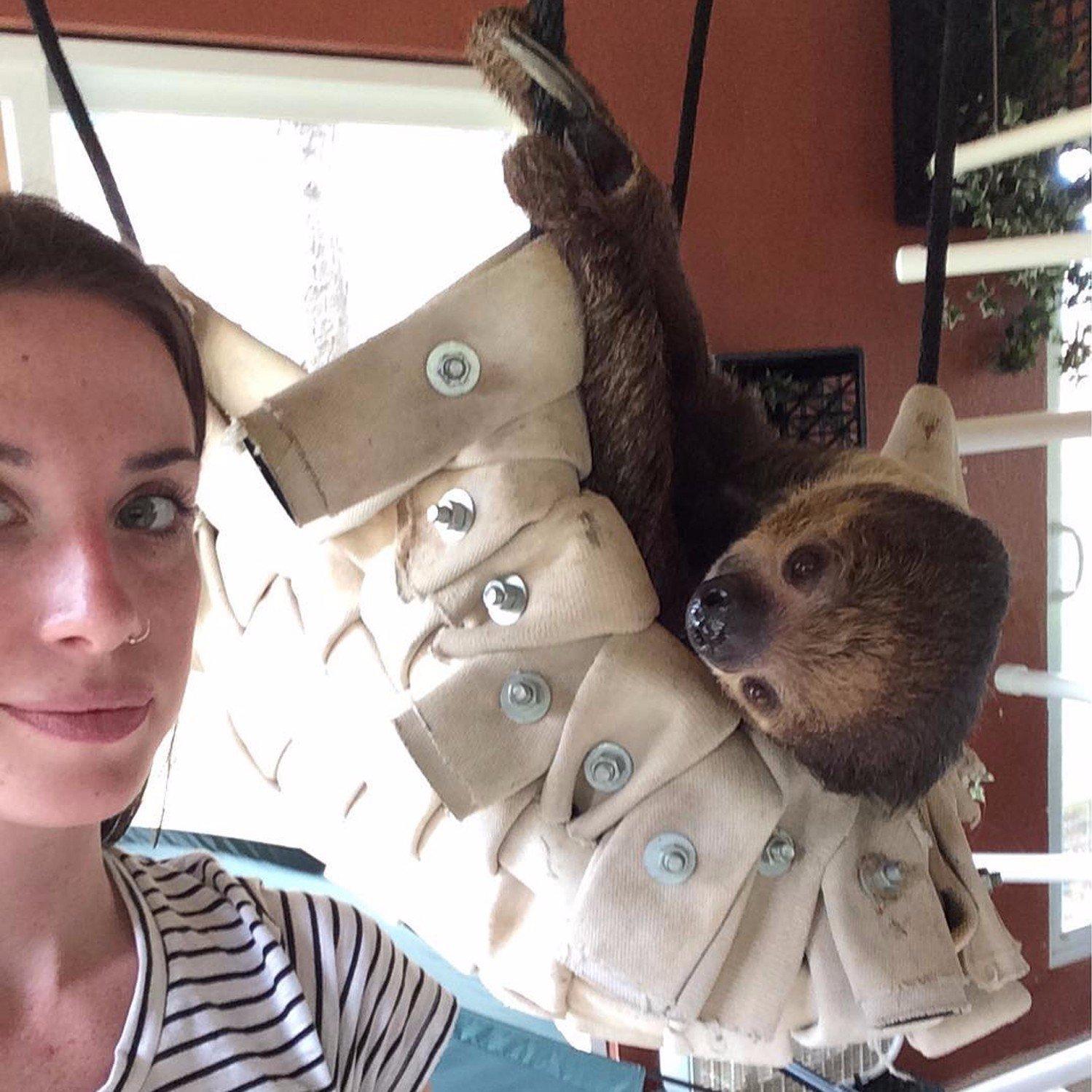 Sloth Hammock