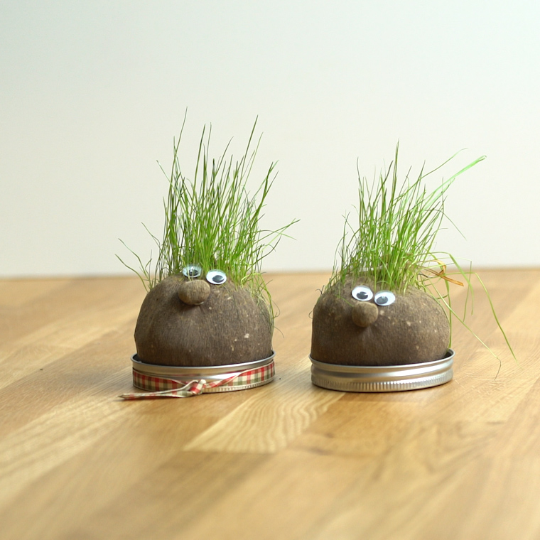 chia pet how to grow