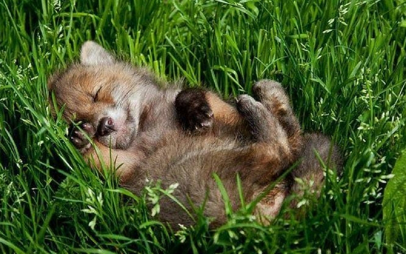 12 Adorable Sleeping Baby Animals To Help Boost Your ...