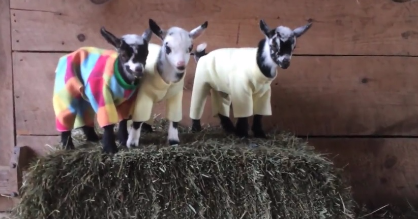 This Pajama Party Is The Most Adorable Thing You Will See