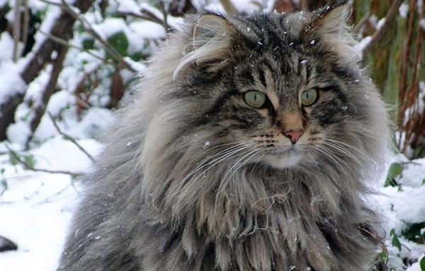 Pet Forest Cat Food