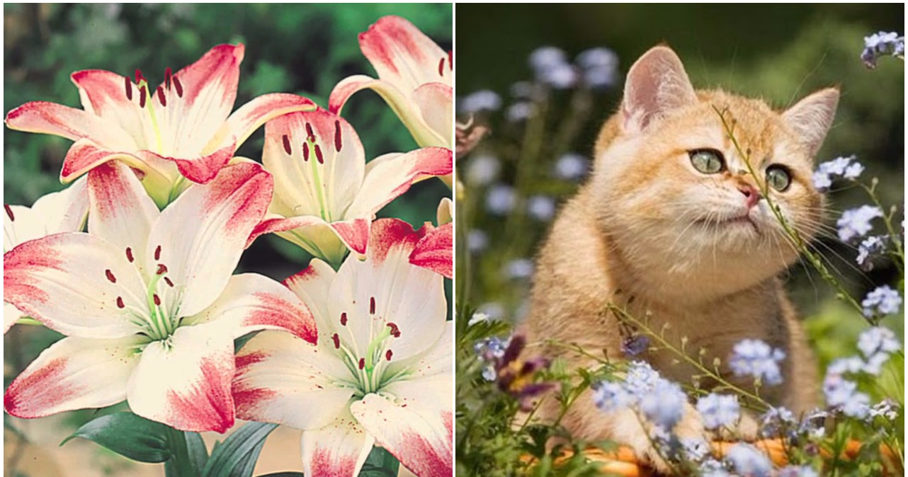 These Common Plants Are A Danger To Your Cat