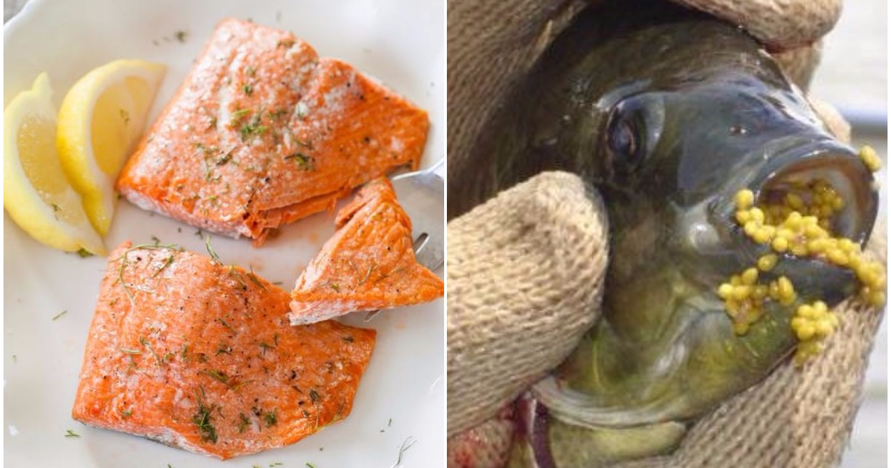 6 kinds of fish you should avoid eating with some healthy for Healthiest fish to eat 2017