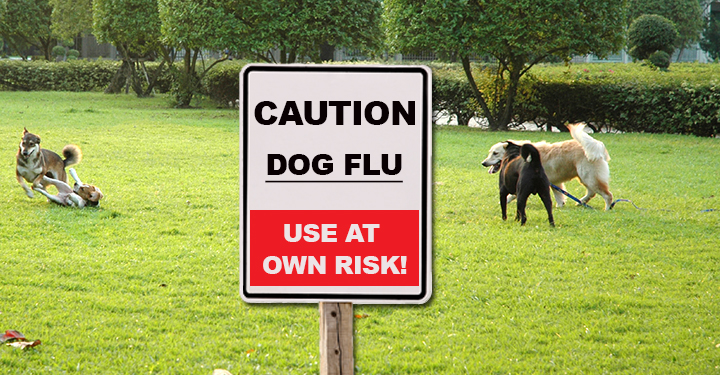 Can Humans Give Dogs The Flu