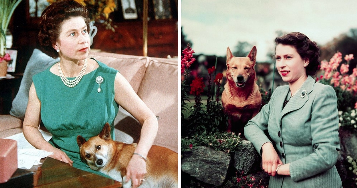 What Is The Name Of Queen Elizabeth Dog