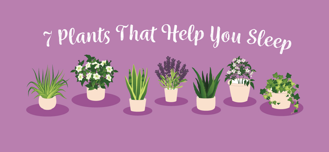 These Are The Best Plants To Keep In Your Bedroom To Help