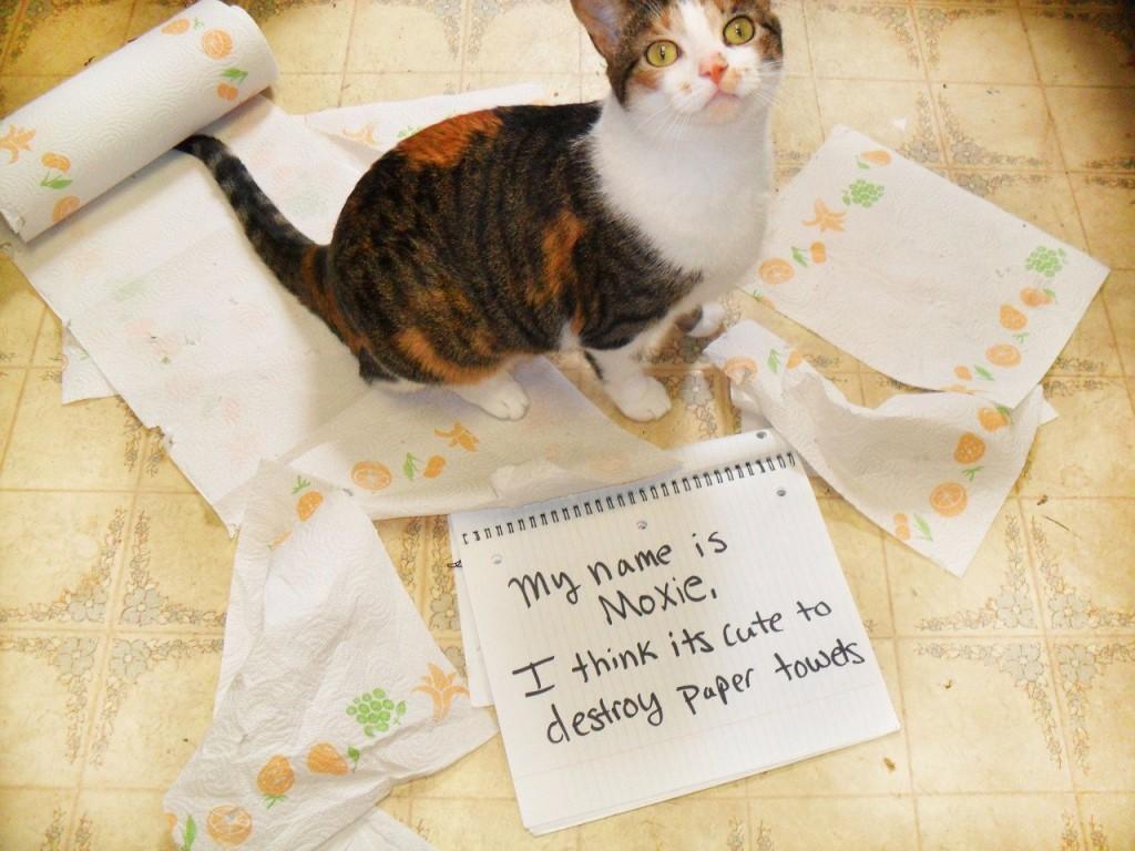 зависимости формы смешные коты фото понять и простить знаю мой
