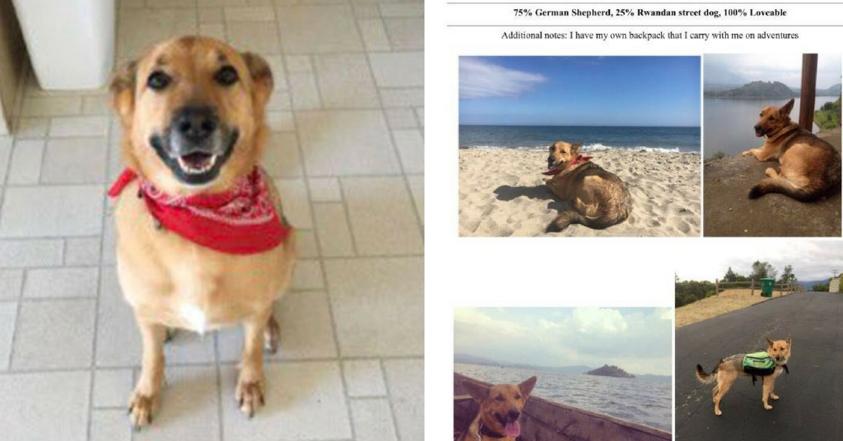 owner creates adorable resume to help foster dog find a home