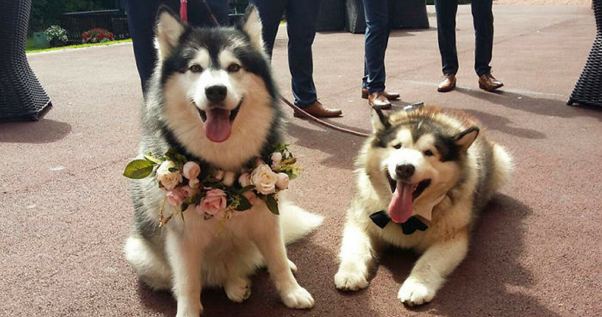 These Dogs Were The Best Man Maid Of Honor At This Wedding And We