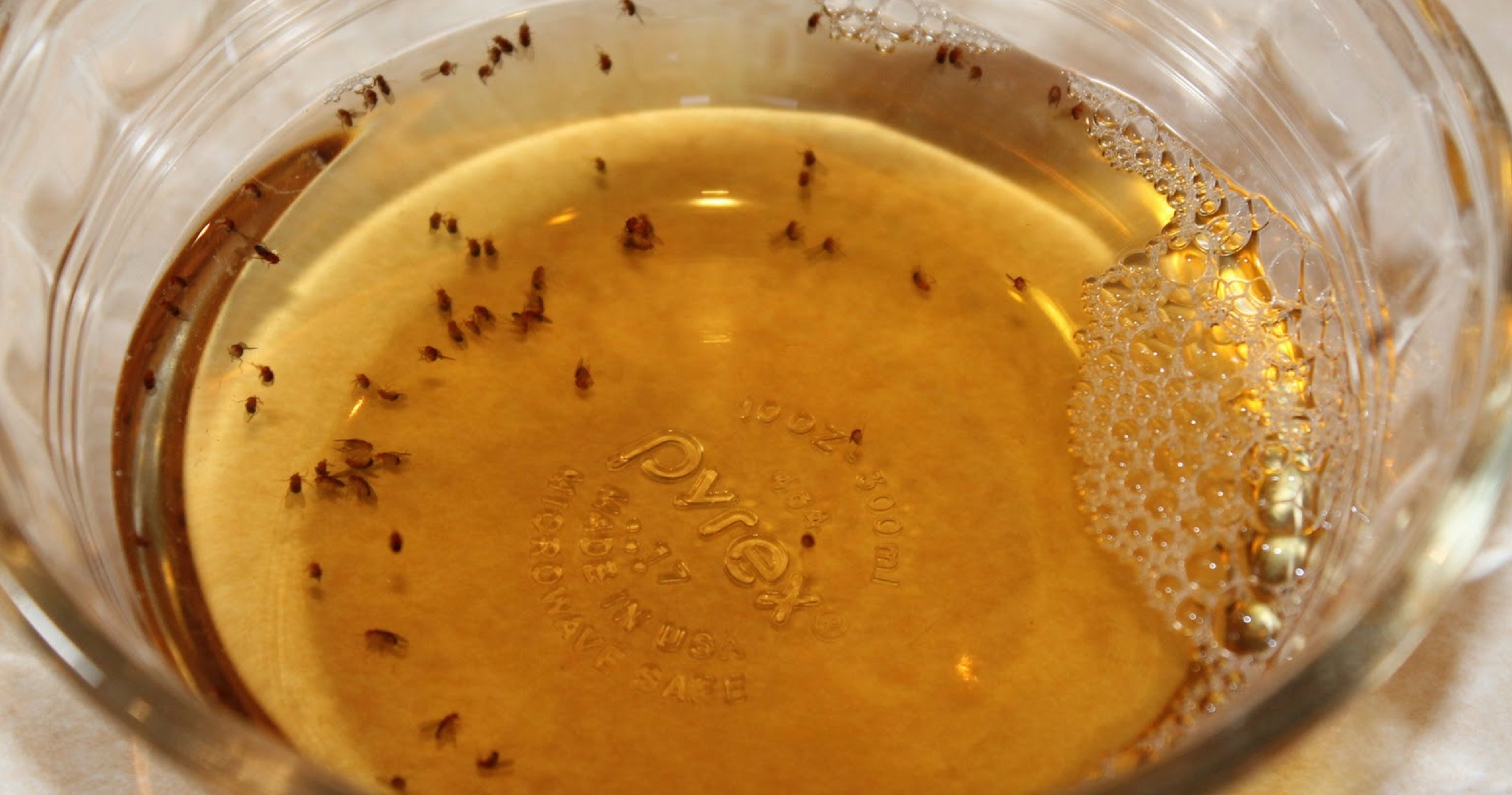 6 Things You Have In Your Home To Fix Your Fruit Fly Problem