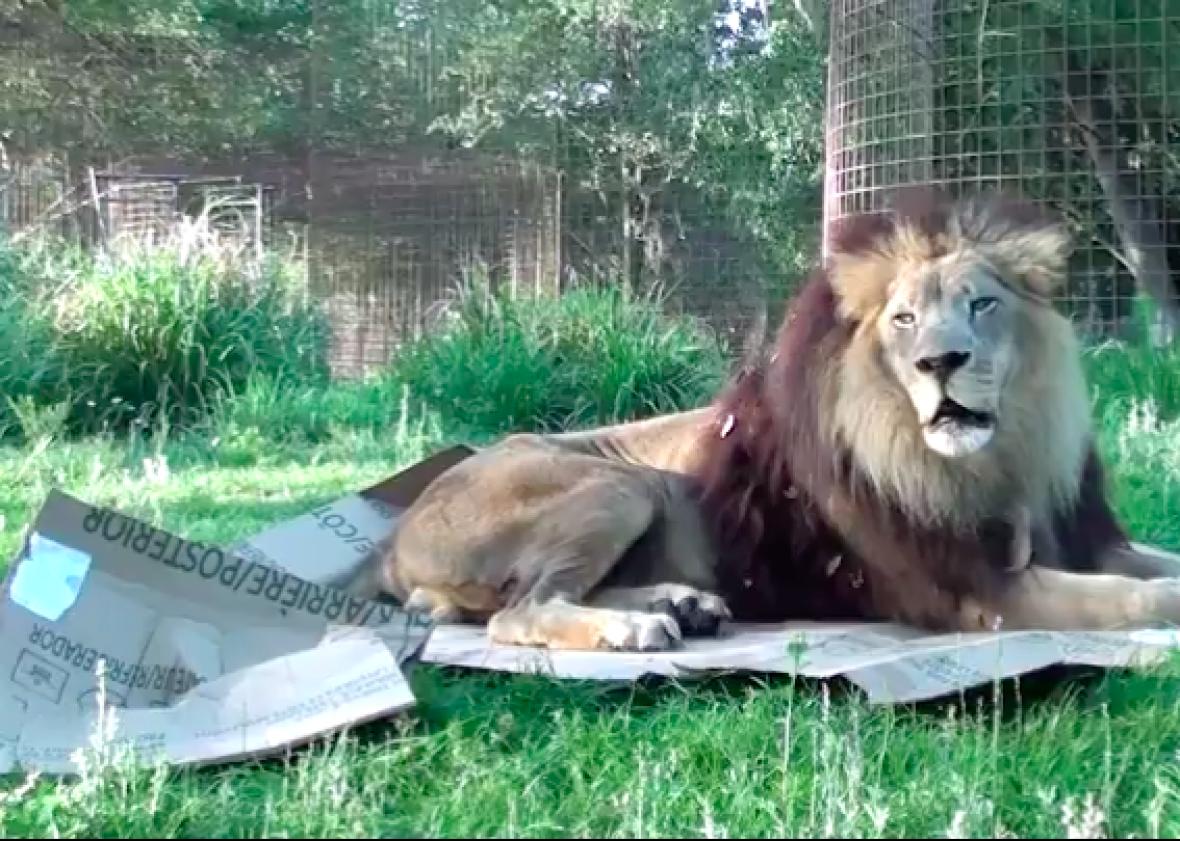 Why Do Cats Like Boxes Slate