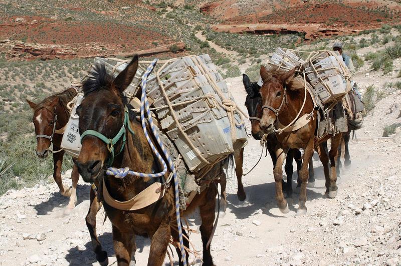 USPS Mules