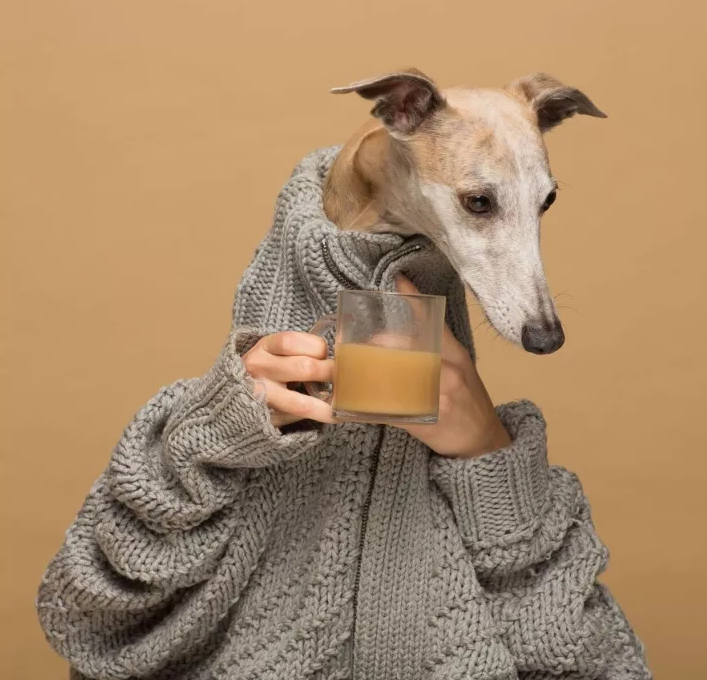 dog with coffee