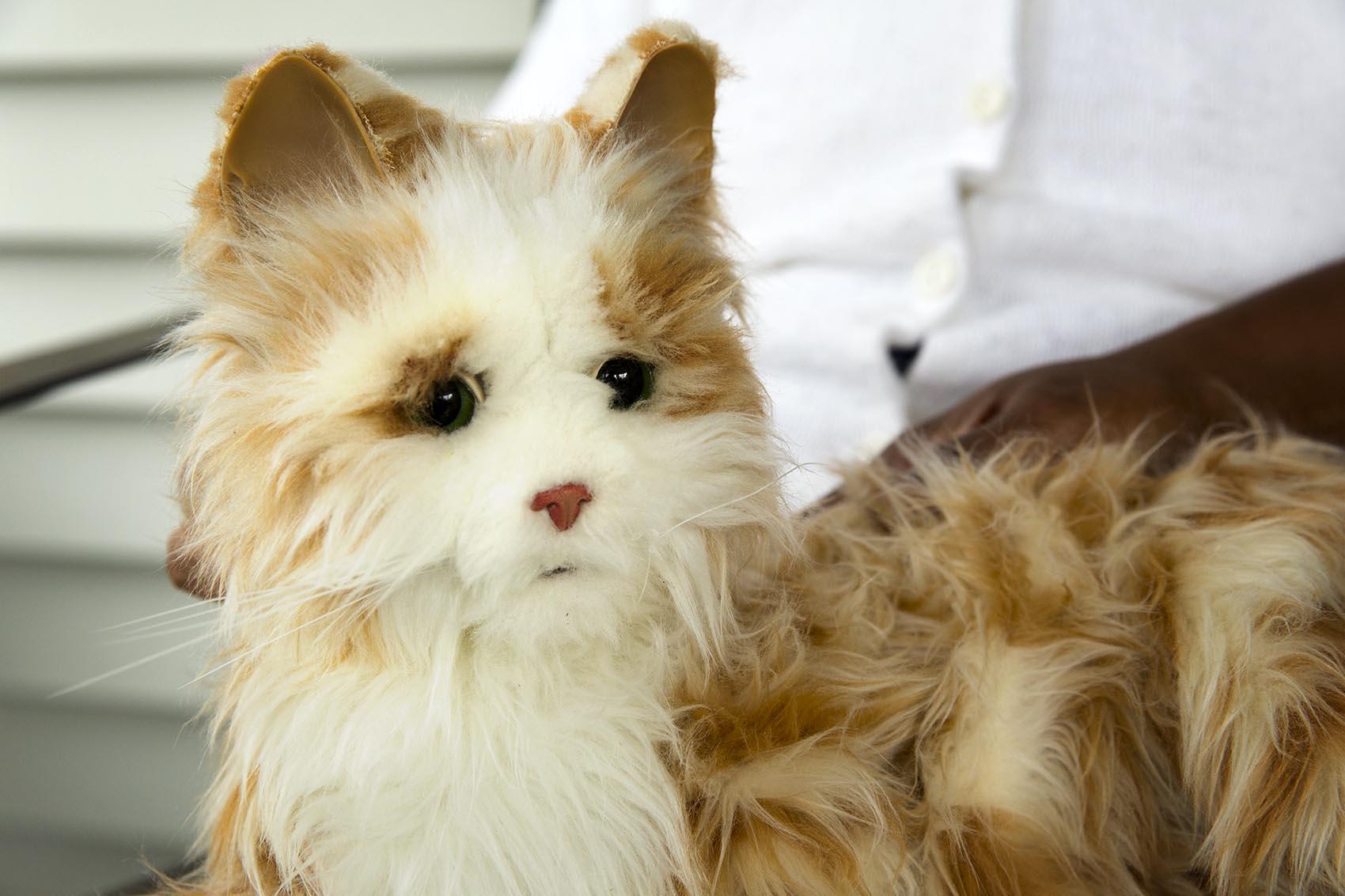 Milo the robotic cat