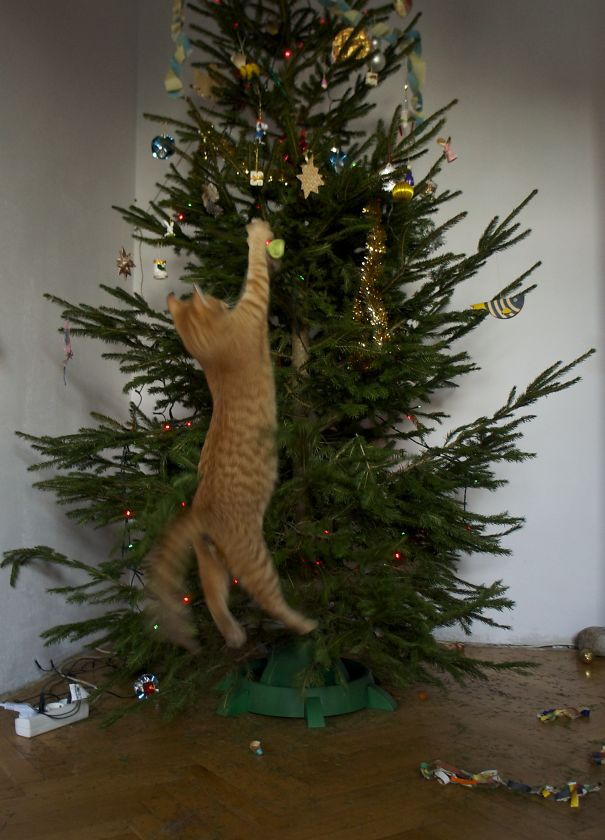 How To Cat Proof Your Christmas Tree.10 Ways To Pet Proof Your Christmas Tree