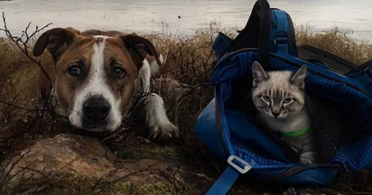 Traveling Dogs And Cats Pictures