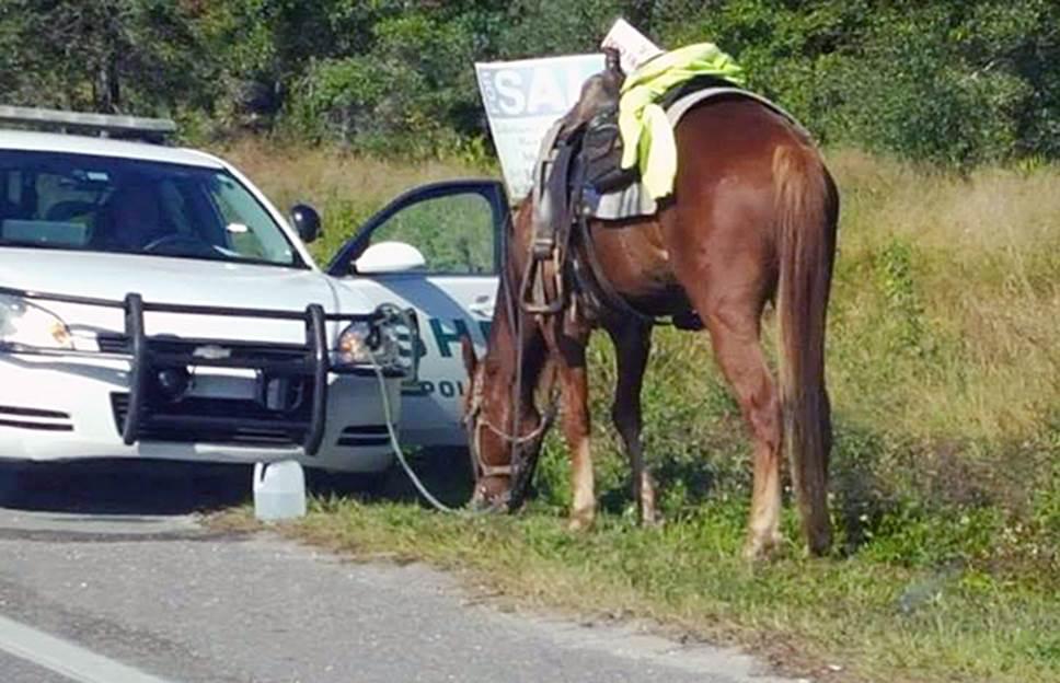 Bo Duke the horse
