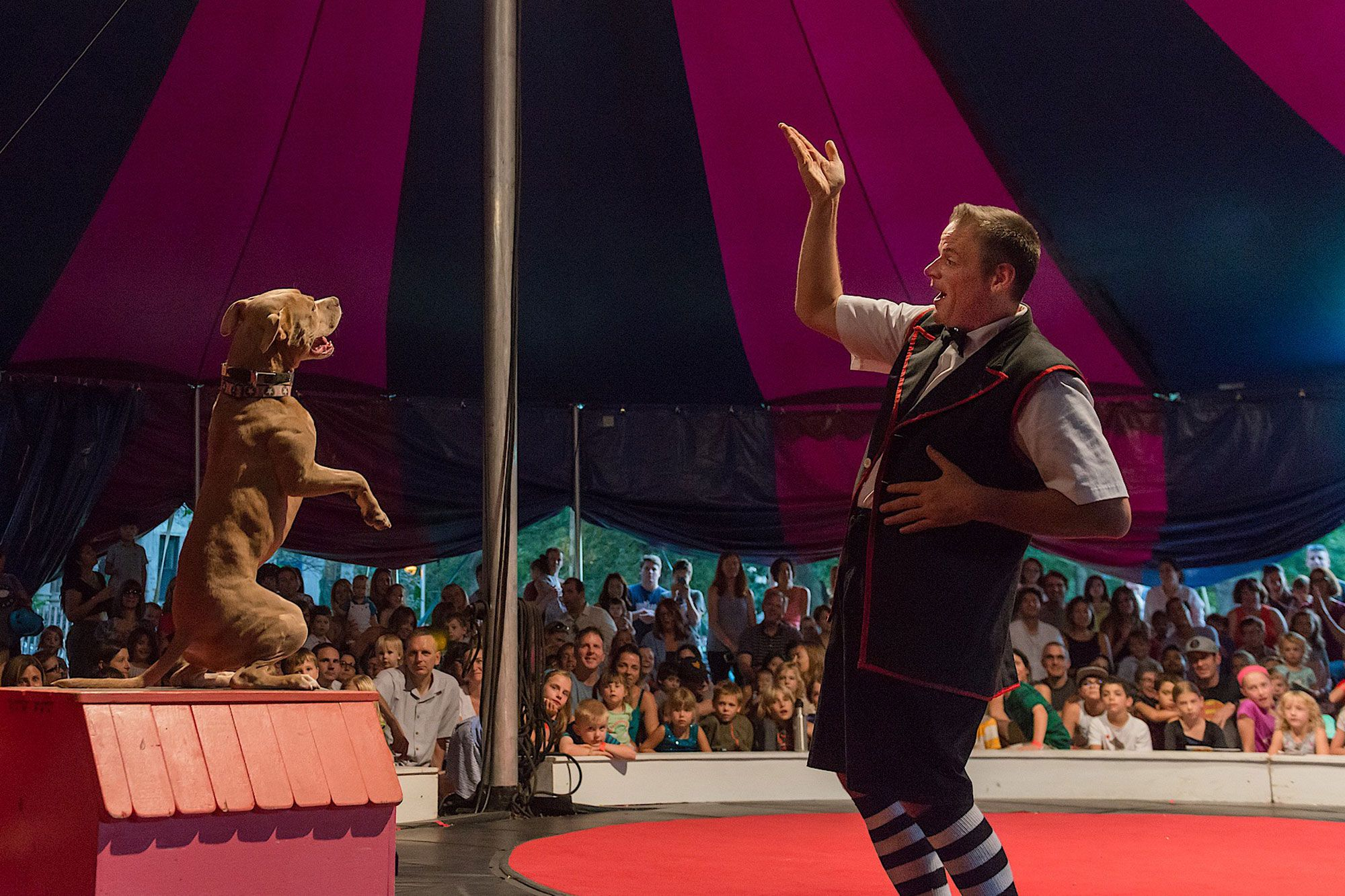 Midnight Circus in the Parks