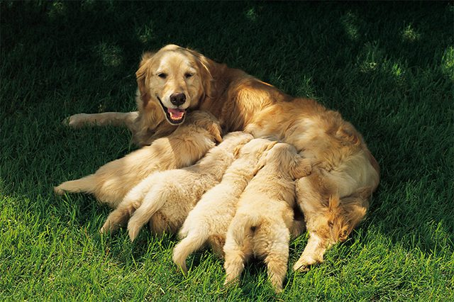 Dog with her pups