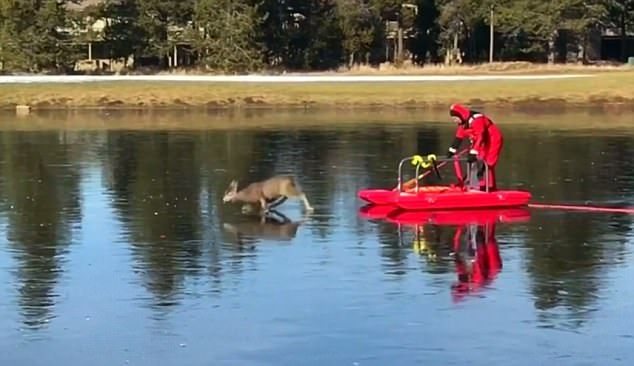 Firefighter JJ Johnston and the deer