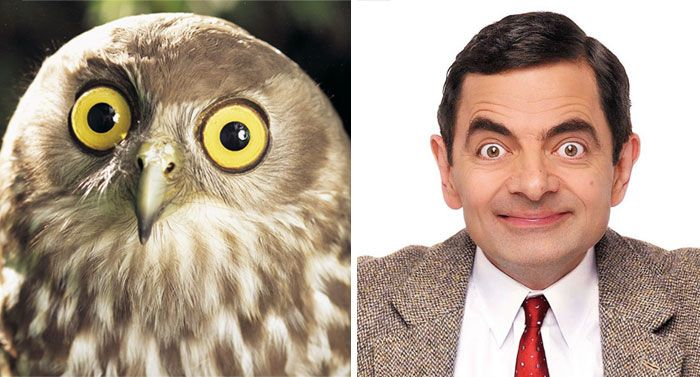 Rowan Atkinson and an owl