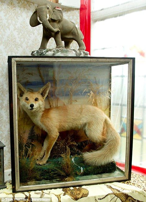 A stuffed fox
