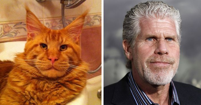 Ron Perlman and this cat